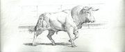 Toro blanc. Philippe Eberle