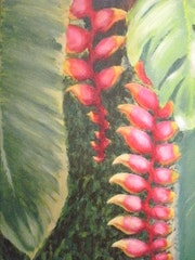 Bananeira de Jardim. Anna Brazao
