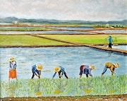 Le repiquage du riz-Thaïlande / Transplanting rice-Thailand.