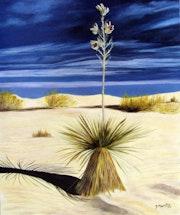 «Yucca du désert».