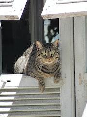 Chat à son poste d'observation. Solena432