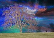 Renaissance d'un arbre.