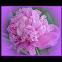 Parfum Exquis! ! ! !. Martine Dugue