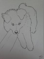 Dolly (2 mois - samoyède).