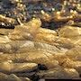 Lumière dorée. Solena432