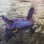 Pato en nacimiento del rio Arbuniel. Jose Maria Charte