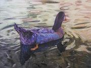 Pato en nacimiento del rio Arbuniel.
