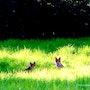 Les renardeaux. Coline Kiene