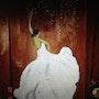 Danseuse habilélle en fleure blanche. Zedl