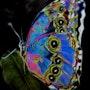 Le splendide papillon. Yokozaza