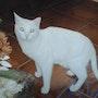 Gato, blanquito. M. Pilar