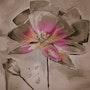 Fleur tout en fuschia…. Rose-Marie (Romy)