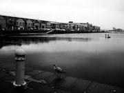L'oiseau, toujours - Les Docks du Havre - Septembre 2013.