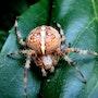 Dame araignée et son joli corsage…. Janeon Photos