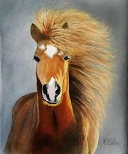 Portrait de cheval.