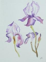 Iris en fleur.