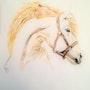 Tête de Cheval blanc. Pioupiou06