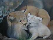 Lynx roux d'Amérique, mère et chaton.