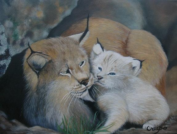 Lynx roux d'Amérique, mère et chaton. Jean Yves Crispo Jean Yves Crispo