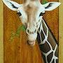 Girafe. Jean Esain