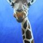 Girafe 2. Jean Esain
