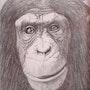 Portrait de singe 2. Jean Esain