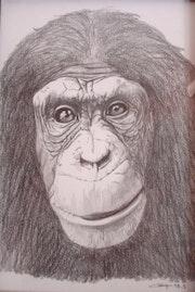 Portrait de singe 2.