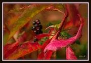 Un si bel automne.
