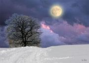 Dans l'hiver se cache le printemps.