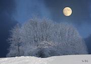 Paysage de neige sous la lune.