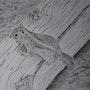 Chipmunk. Geoffroy Jooris