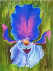 Le coeur de l'iris.