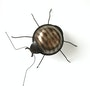 Weevil. Lawrie Simonson