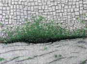 Vert sur gris. Claude Guillemet