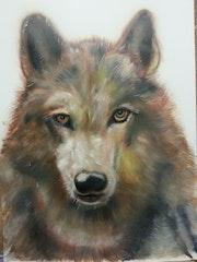 Wolf. Dirk Halamoda