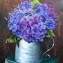 Hortensienblüte. Simone Wilhelms