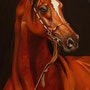 Pferdeportrait » Athos».