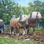 Les chevaux du moulin de vanneau. Virginie Trabaud