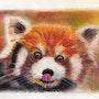Le panda roux de Chine. Michèle G