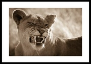 «Protecting mother» limited edition framed print.