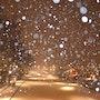 Paris sous la neige. Sharareh Jafarinejad Soumeh Sarae