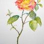 Rose grimpante de mon jardin. Maryse Berthouloux