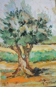 L'olivier à Collioure.
