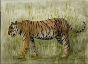 Tigre du Bengale.