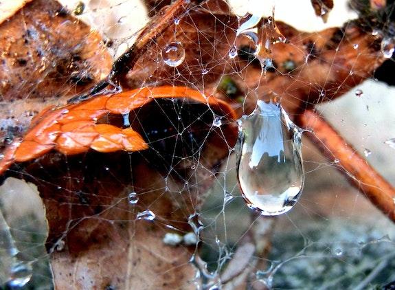 Dégats des eaux…. Janeon Janeon Photos