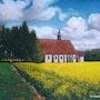 Eglise de Montliard et champ de colza. Patrice Latger