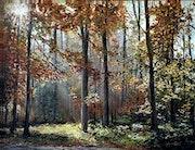 L'éveille de la forêt-Forêt de Lyons / The awakening of the forest Foret de Lyon.