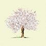 Cerisier. Reine