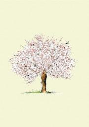 Cerisier.