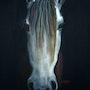 Primavera, cheval andalous. Yokozaza